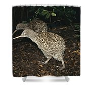 Great Spotted Kiwi Breeding Pair New Shower Curtain