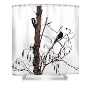 Great Spotted Woodpecker And A Blackbird. Dude What Are You Doing Shower Curtain