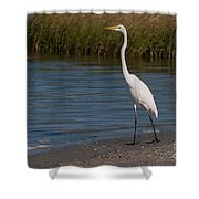 Great White 184 Shower Curtain