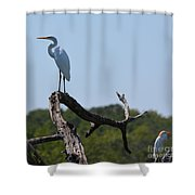 Great White Egret And Friend Shower Curtain