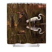Great White Egret And Mallard Flight Sunrise Reflection Shower Curtain