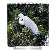 Great White Egret Building A Nest Viii Shower Curtain