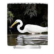Great White Egret Eating Fish 2 Shower Curtain