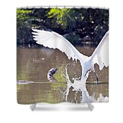 Great White Egret Fishing Sequence 2 Shower Curtain