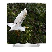 Great White Egret Flying 1 Shower Curtain