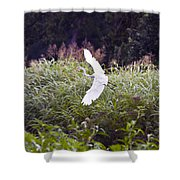 Great White Egret Flying 2 Shower Curtain