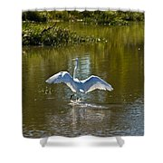 Great White Egret In Sunlight Shower Curtain