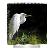 Great White Egret In The Tree Shower Curtain