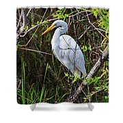 Great White Egret In The Wild Shower Curtain