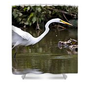 Great White Egret Looking For Fish 1 Shower Curtain
