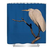 Great White Egret On A Snag Shower Curtain