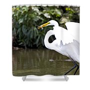 Great White Egret Show Off Shower Curtain