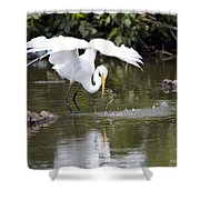 Great White Egret Wingspan And Turtles Shower Curtain