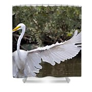 Great White Egret Wingspan1 Shower Curtain