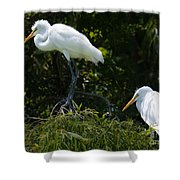 Great White Heron Meeting Shower Curtain