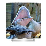 Great White Pelicans Shower Curtain