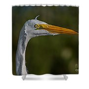 Great White Portrait 2 Shower Curtain