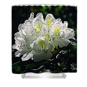 Great White Rhododendron Shower Curtain