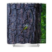 Greater Crested Flycatcher Shower Curtain