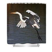 Greater Egret Landing Shower Curtain