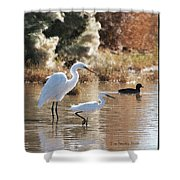 Greater Egret Lesser Egret And Coot Shower Curtain