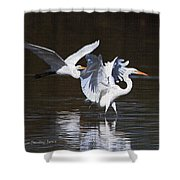 Greater Egrets Meet Up  Shower Curtain