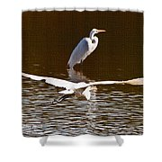 Greater Egrets Meeting Up Shower Curtain