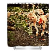 Greater Flamingo Shower Curtain