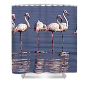 Greater Flamingo Group Shower Curtain