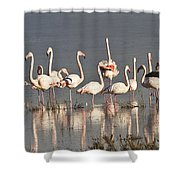 Greater Flamingos At Laguna De La Fuente De Piedra Shower Curtain