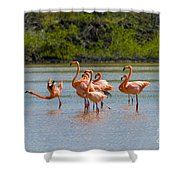 Greater Flamingos Shower Curtain