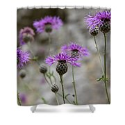 Greater Knapweed Shower Curtain