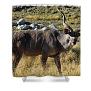 Greater Kudu Grazing Shower Curtain