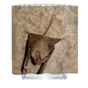 Greater Mouse-tailed Bat Rhinopoma Microphyllum Shower Curtain