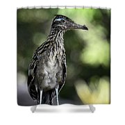 Greater Roadrunner  Shower Curtain