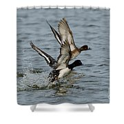 Greater Scaup Pair Shower Curtain