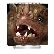 Greater Spear-nosed Bat Shower Curtain