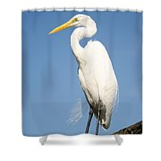Greater White Egret Shower Curtain