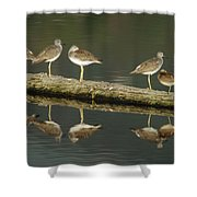 Greater Yellowlegs Shower Curtain