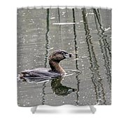 Grebe In The Reeds Shower Curtain