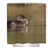 Grebe With Feather Shower Curtain
