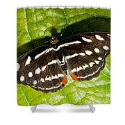 Grecian Shoemaker Butterfly Shower Curtain