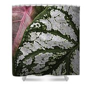 Green And Pink Caladiums Shower Curtain
