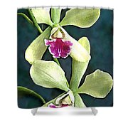 Green And Purple Cattleya Orchids Shower Curtain
