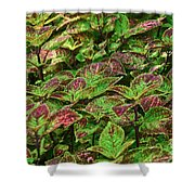 Green And Purple In Nature Shower Curtain