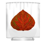 Green And Red Aspen Leaf 3 Shower Curtain