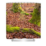 Green And Red Nature In The Forest Shower Curtain