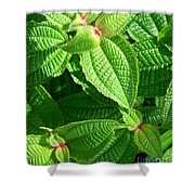 Green And Ruffled Shower Curtain