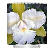 Green And White Cattleya Orchid Shower Curtain