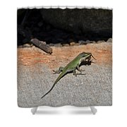 Green Anole Lizard Vs Wolf Spider  Shower Curtain